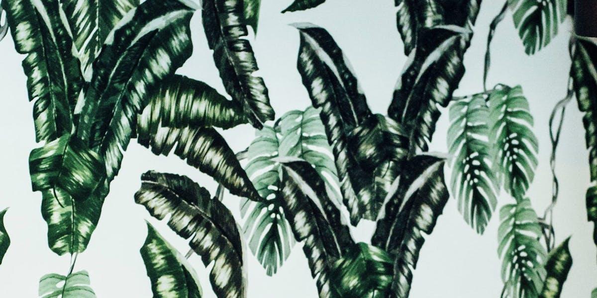planta toronto planta
