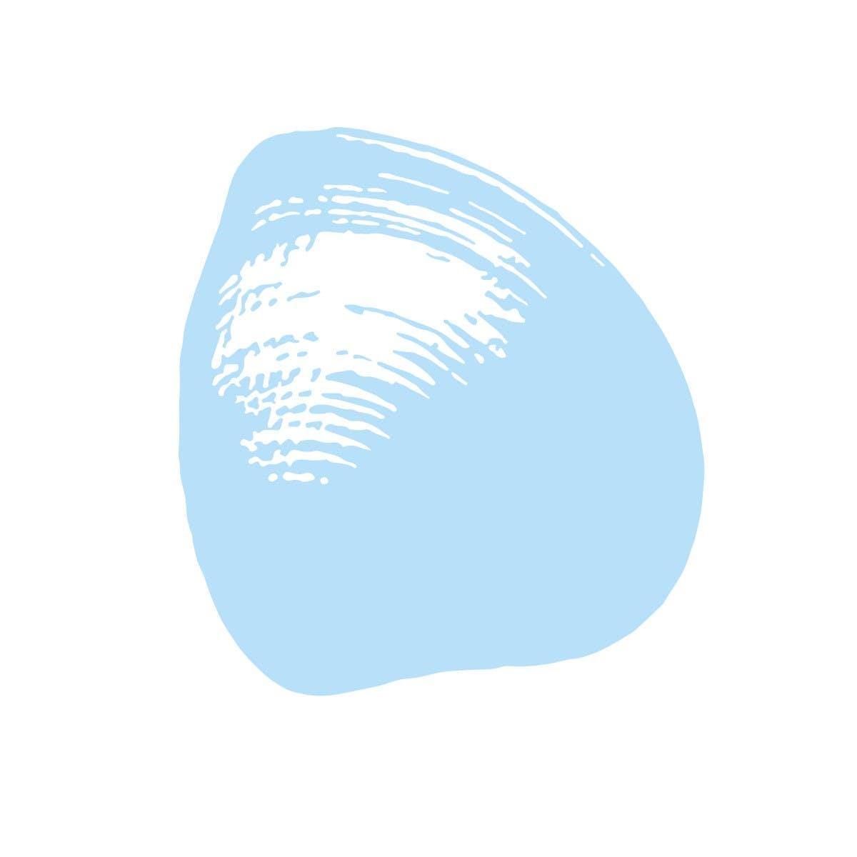 Clam Image - 2